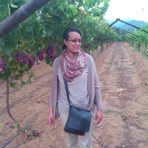 Visiting wine firms in the Cape Of Good Hope