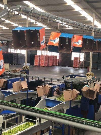 Gossamer packhouse efficiency setup