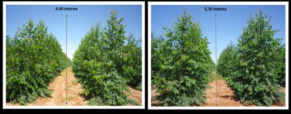 The effects of Basacote products on trees comparison