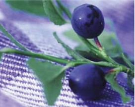TMS System dare very good for blueberries