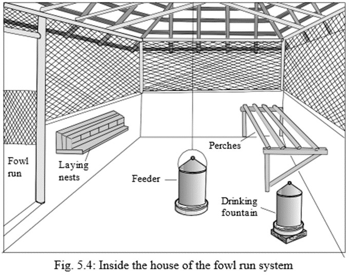 Small-Scale Poultry farming fowl run system