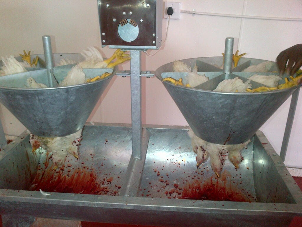 Agro-processing of Poultry, chicken bleeder