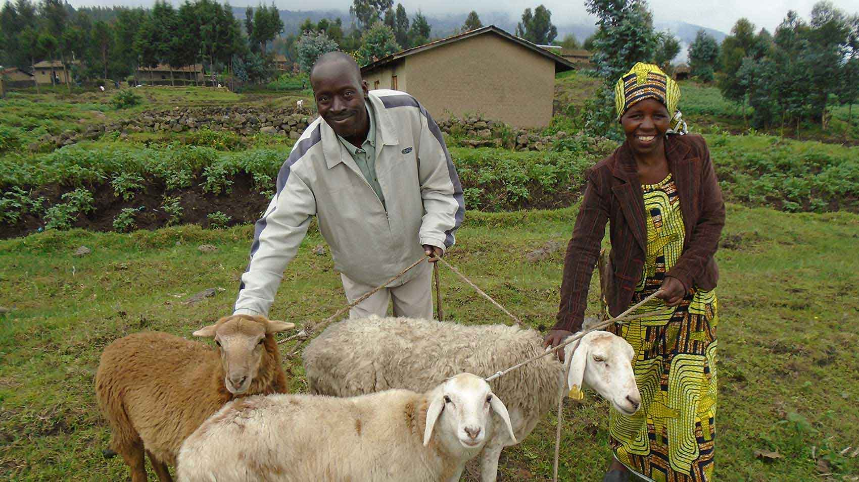 Maria Nyirambonizanye and her husband are among the farmers helped by the Rwanda Pyrethrum programme